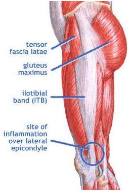 muscle mondays | Balance Biomechanics