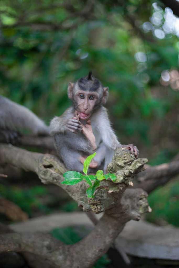 baby monkey at ubud monkey forest