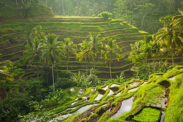 Bali Governor Implements New Decree To Use Clean Energy