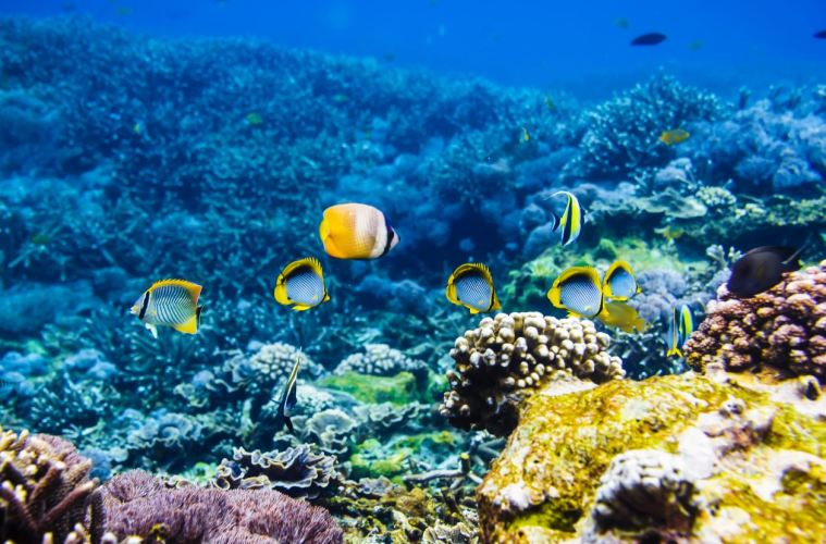 Coral Restoration Project In Bali Will Provides Income To Local Community