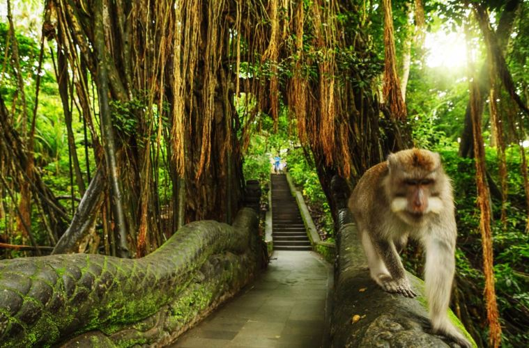 Ubud Monkey Forest In Bali Will Reopen November 5th
