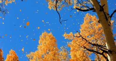 Leaves fall, panic spreads that sky might be next