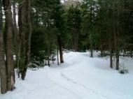20130326-Snow-Paths-04