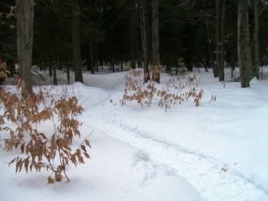 20130326-Snow-Paths-06