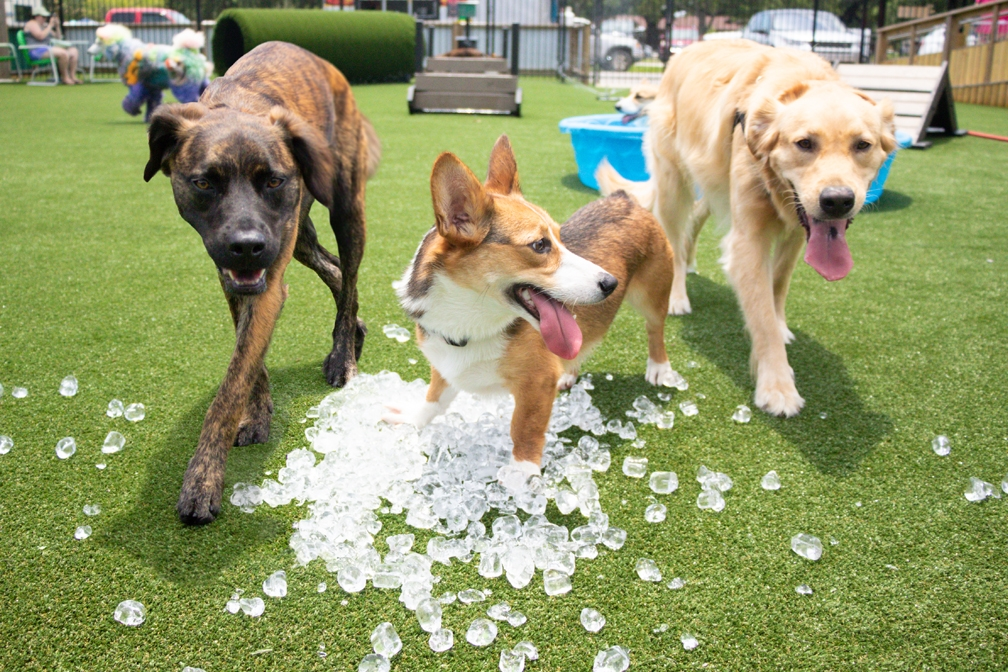 Hophounds Dogs Playing In Ice