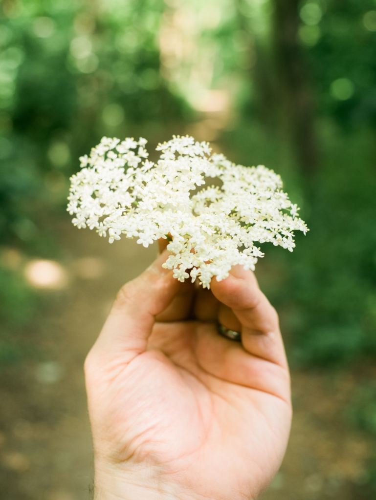 Person Holding White Flower During Daytime