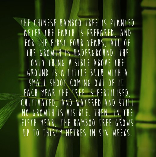 Image result for bamboo tree