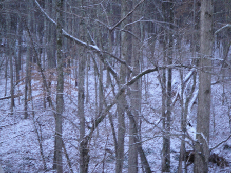 woodsinthesnow.jpg