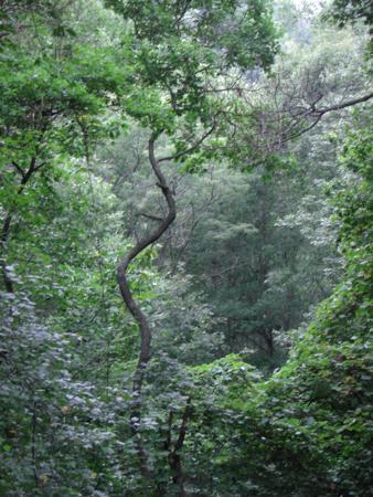 singletreeinforest.jpg