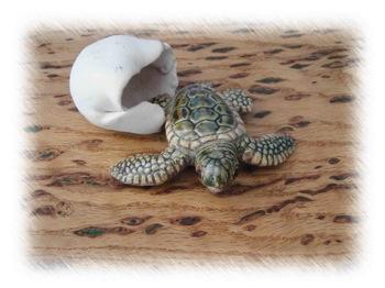 turtleemerging.jpg