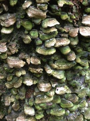 TreeBeauty