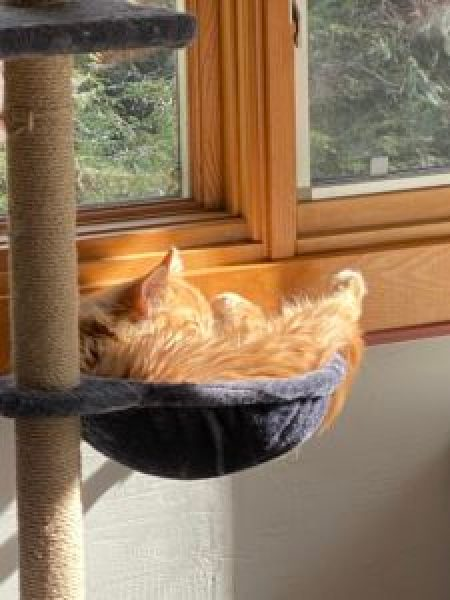 An orange tabby kitten sleeps in the sunshine