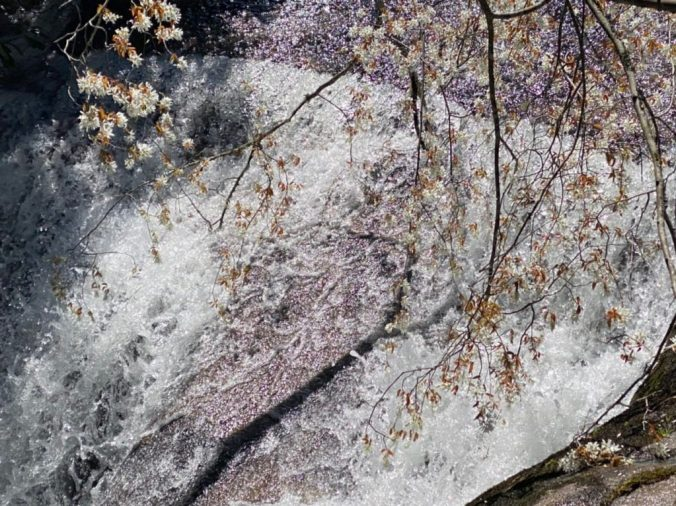 blooming tree over waterfall