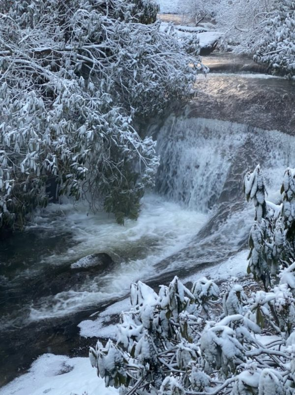 snow covered trees around the waterfall
