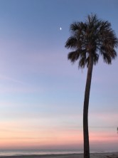Palmetto and Moon.