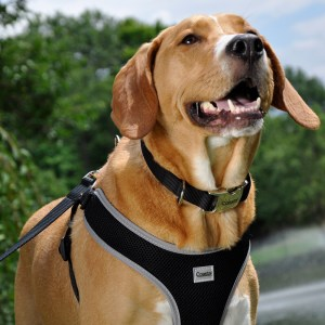 Collars, Leashes, and Harnesses at The Bark Academy