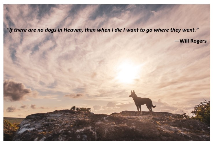 Quotes at The Bark Academy