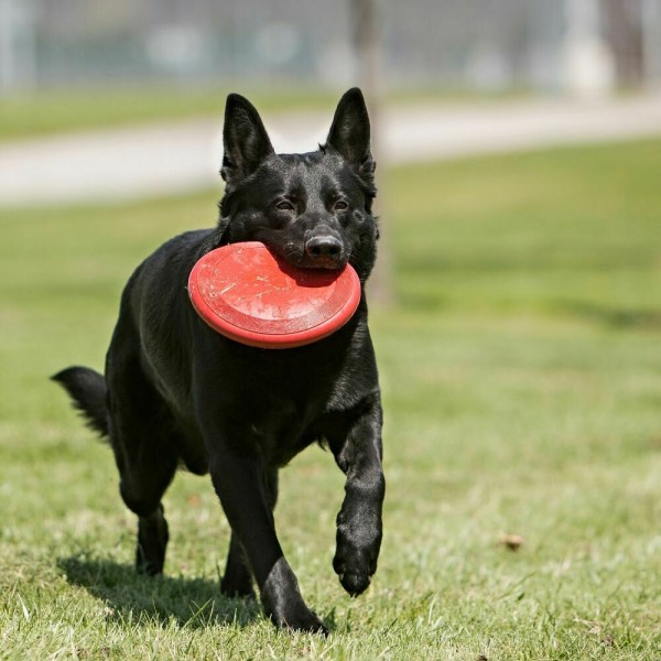 Flying Discs for Dogs