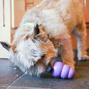 Chew Toys for Senior Dogs