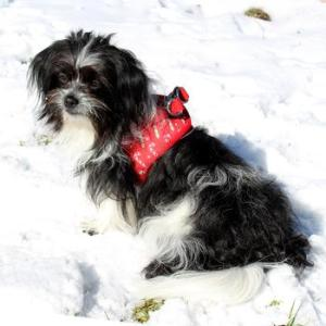 Holiday Harnesses for Dogs