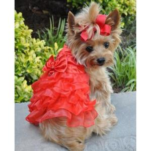 Christmas Dresses for Dogs