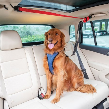 Vehicle Ziplines for Dogs