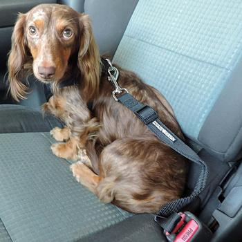 Seat Belt Leashes for Dogs