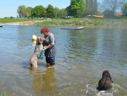 Ina (Imo) multi-tasking - cuddling and paddling