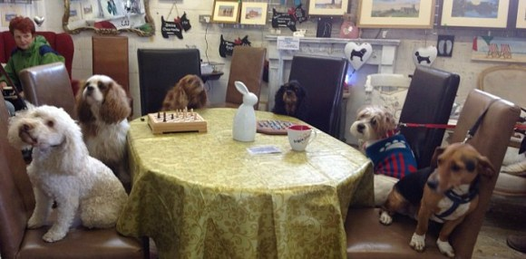 Dog Friendly Pubs, Restaurants & Cafes - The Barking ...