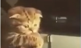 Kitten refuses to give steak back
