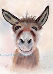 donkey selfie copyright