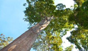 Types of wood in Australia