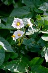 gardens - 50