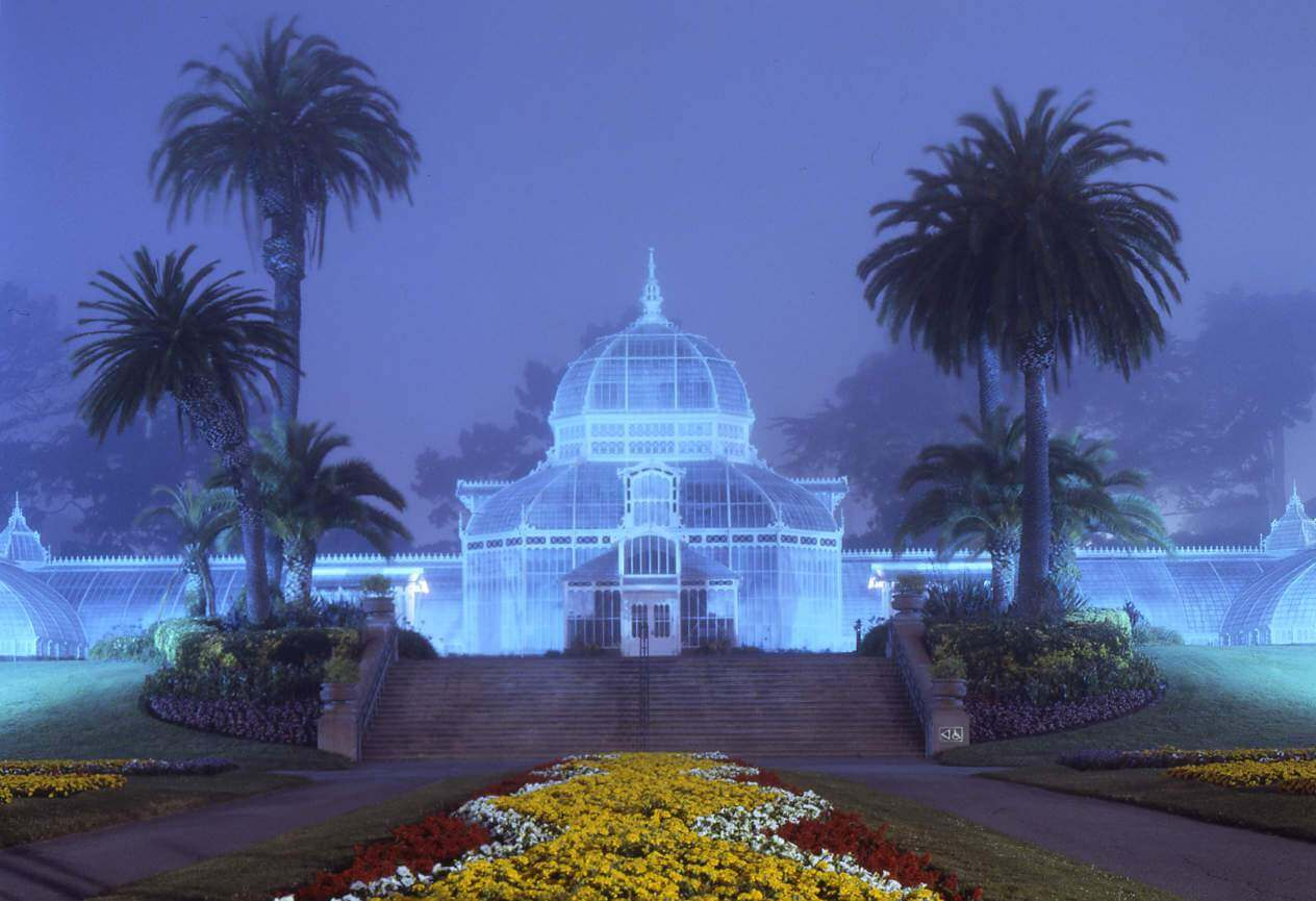 conservatory-flowers-night