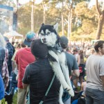 Deer Tick at Hardly Strictly Bluegrass 2018 in Golden Gate Park, by Ria Burman