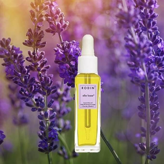 Detail of garden lavender flowers