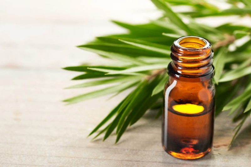 Wonders of Tea Tree Oil Massage for Your Skin