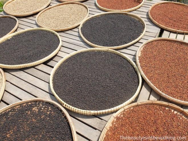 Les grains de poivre séchés au soleil.