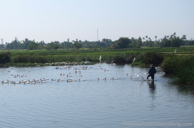 White duck farming