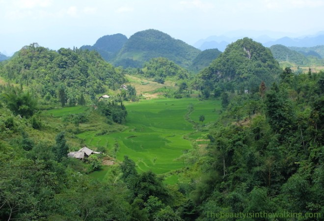 View on the rice terraces - Ha Giang Geopark