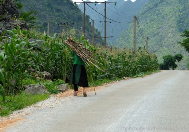 Old Hmong lady carrying wood