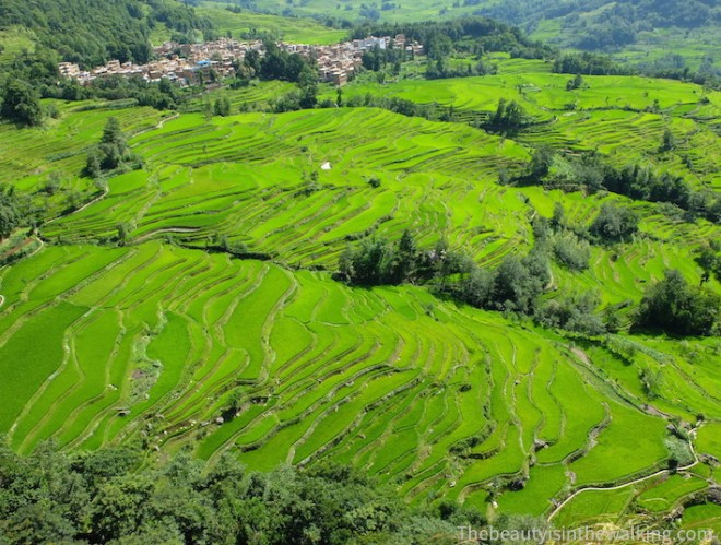 Overview on the rice field terraces