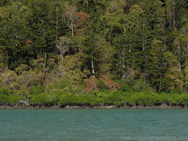 Mangrove et forêt