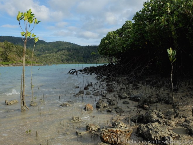 Mangrove sur Lady Island