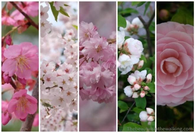 Spring flowers, Japan