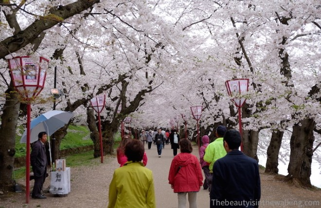 Blossoming alley around Hirosaki castle