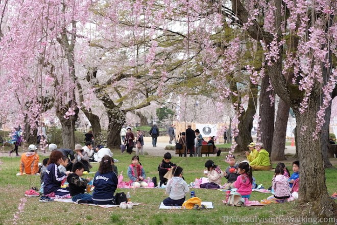 Hanami, picnic under the cherry blossom