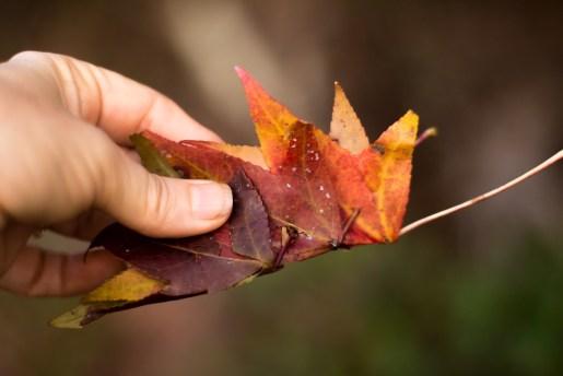 leaf crown tutorial (8 of 8)