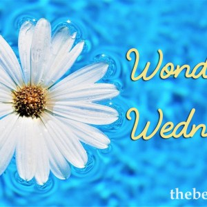 Wondering Wednesday – What Did You Do During the Summers as a Kid?