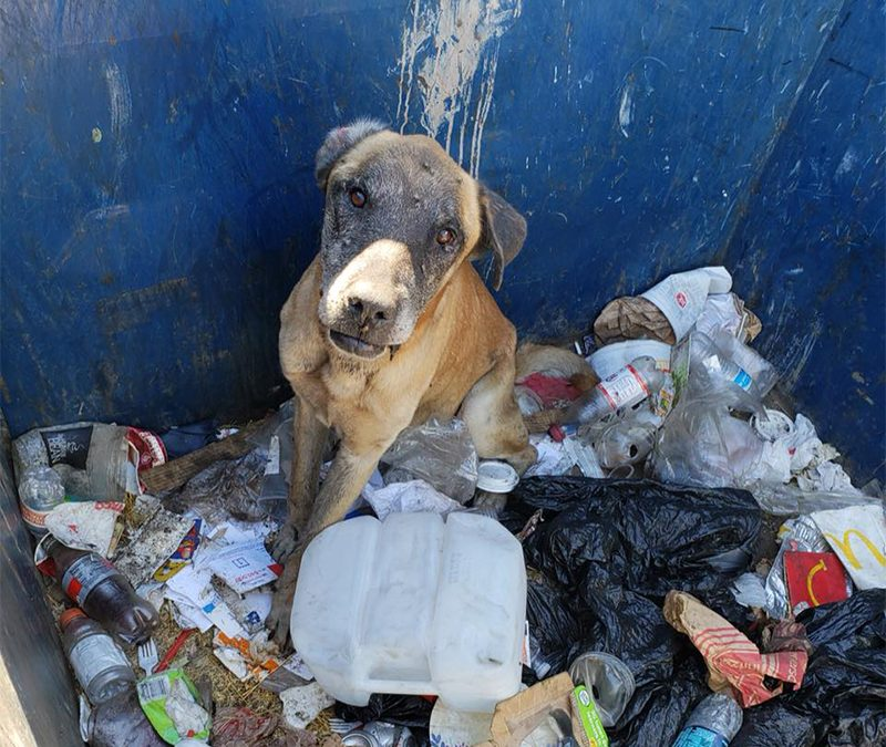 Authorities Searching For Person Who Allegedly Tossed Dog In Dumpster